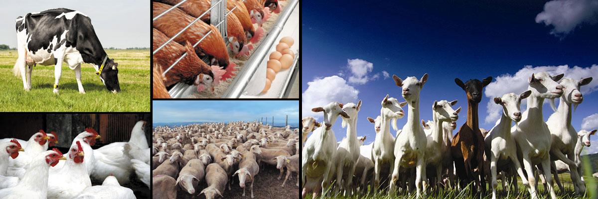 nutria hellas animal feed specialities